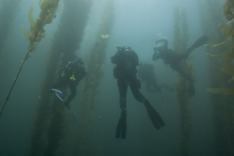 In the kelp forest